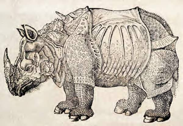 Rhinoceros_woodcut