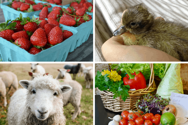 52 ways to make money on a small homestead