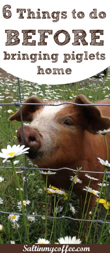 6 things to do before brining piglets home