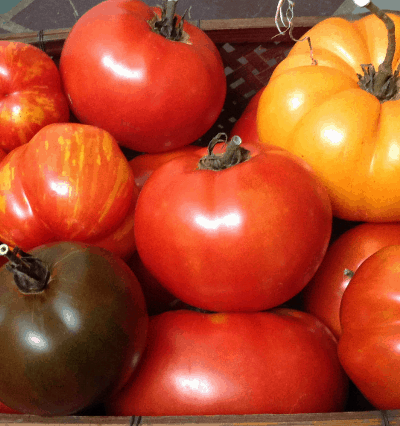 Best tasting heirloom tomatoes
