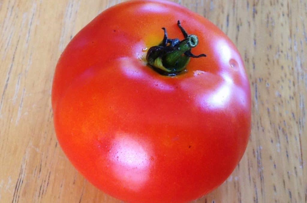 Oregon Spring Tomato