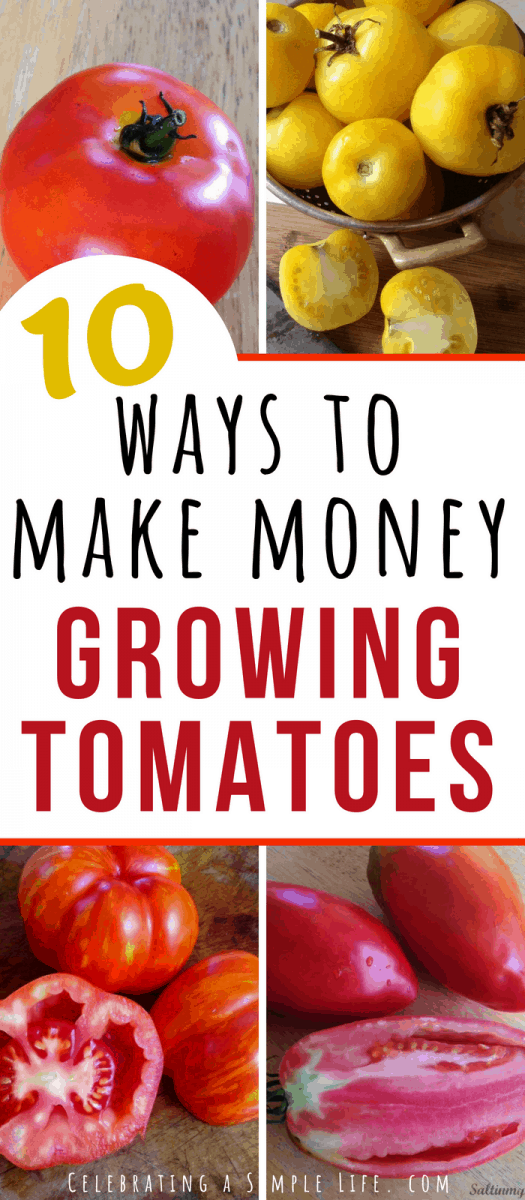 10 ways to make money growing tomatoes