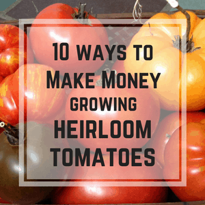 make money selling heirloom tomatoes