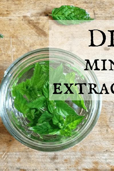 DIY Mint Extract