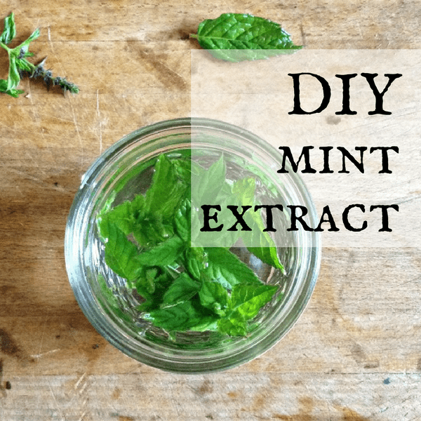 how to make mint extract quick