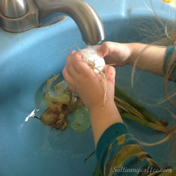 washing onions for making onion powder