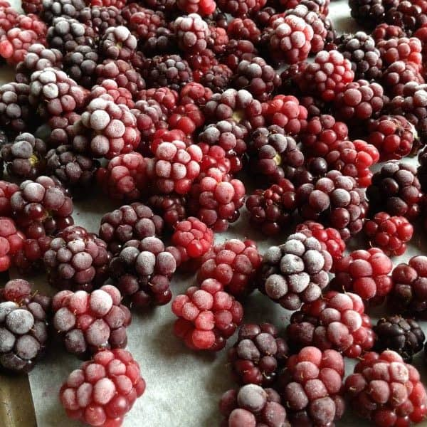 how to freeze blackberries yourself