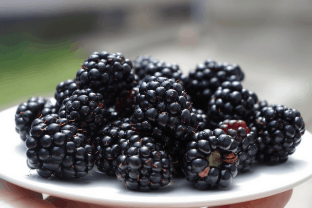 how to freeze blackberries