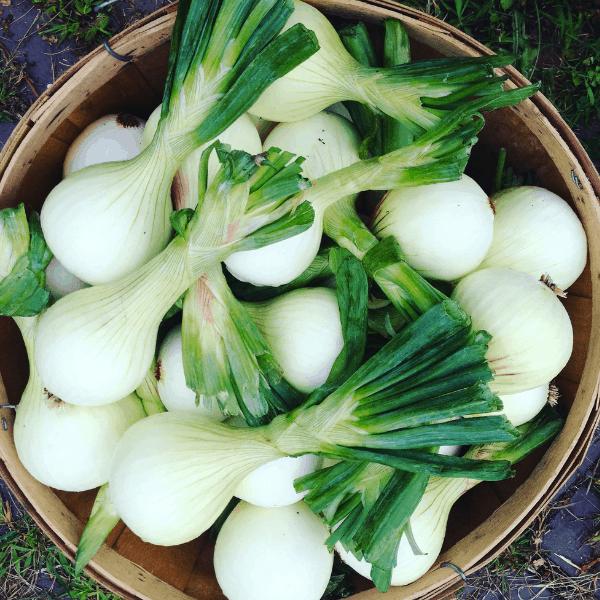 onions in a bushel basket