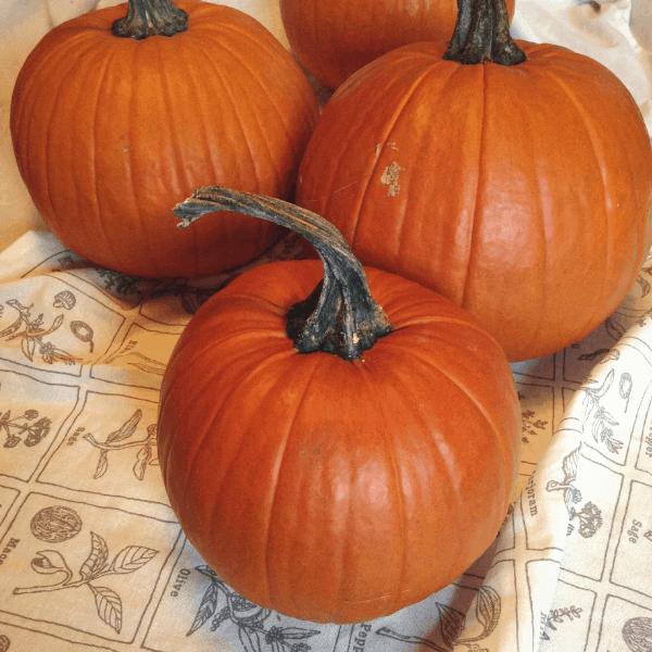 how to cook a pie pumpkin in an instant pot #instantpot #instantpotrecipes #pumpkin #cookingwithpumpkin #pumpkinpuree