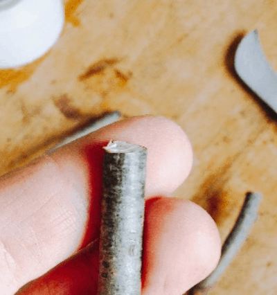 where to get rootstock for grafting