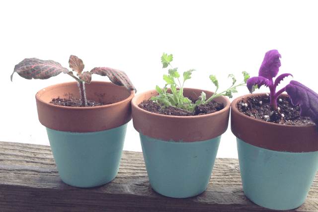 painted mini windowsill pots