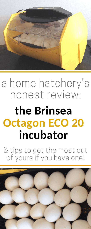 Brinsea Octagon ECO 20 incubator review
