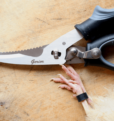 best kitchen shears for butchering quail and poultry