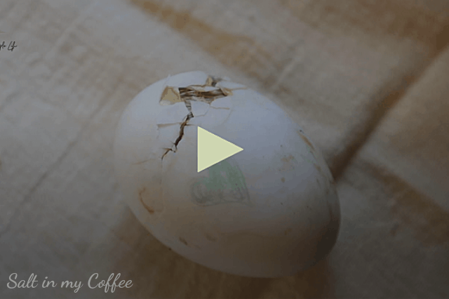 duckling hatching videos