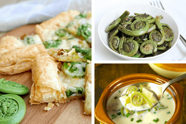 fiddlehead recipes