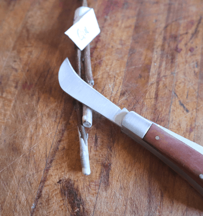 curved grafting knife with scionwood