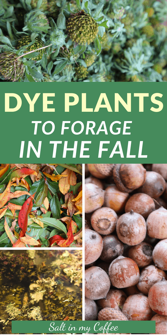 Dye plants to forage in fall
