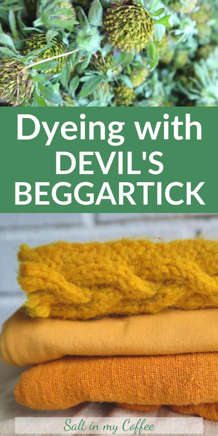 Method for dyeing with Devil's Beggartick