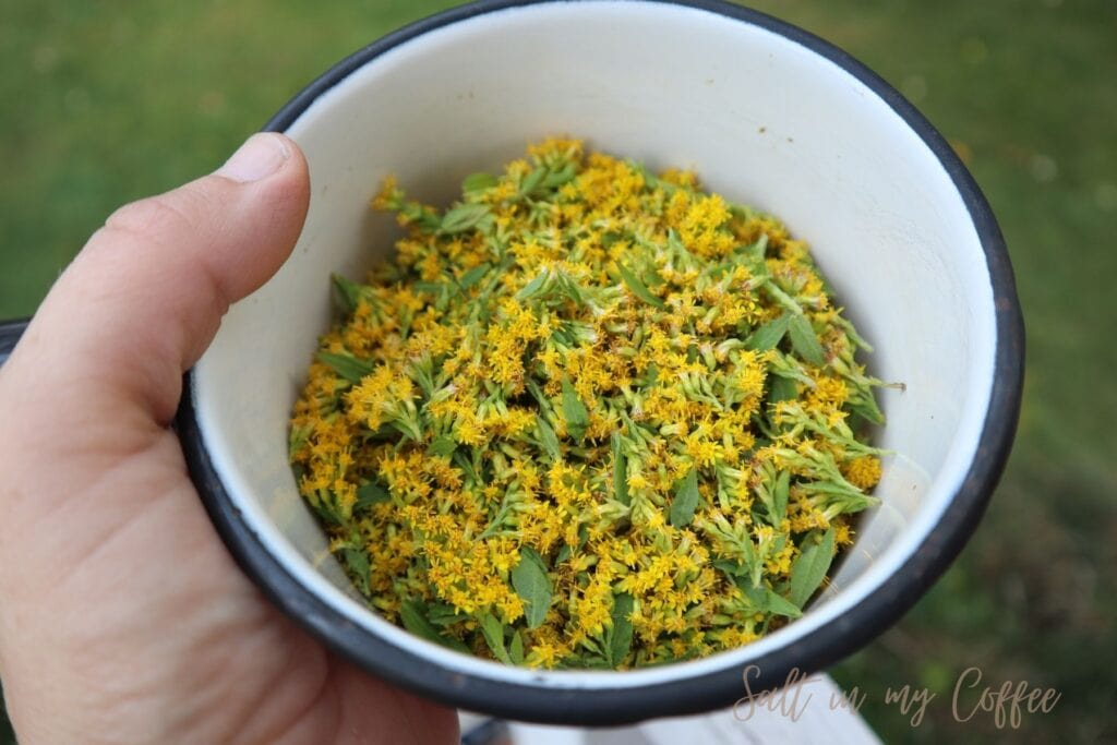 goldenrod blossoms in a pan for making a dye bath