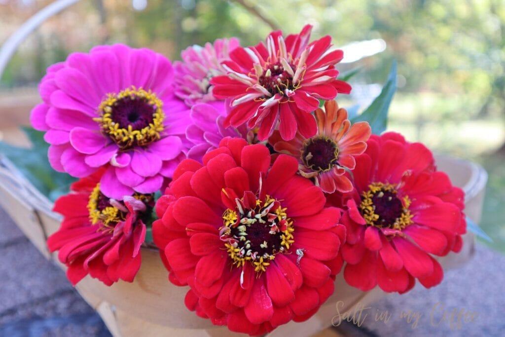cut flowers for sale