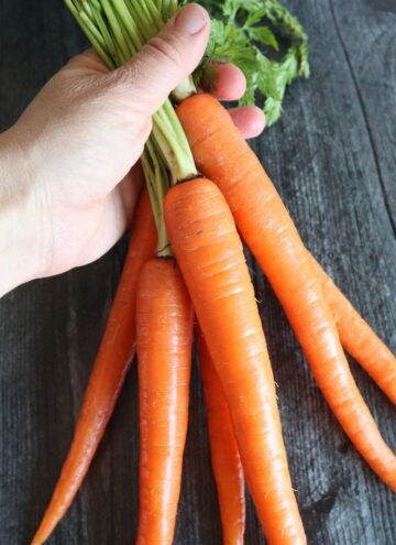 bunch of freshly picked carrots