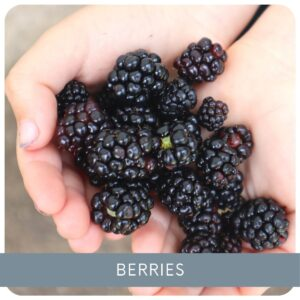 Growing Berry Bushes